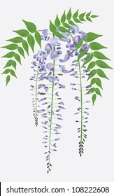 Blooming wisteria branch with leaves, vector illustration