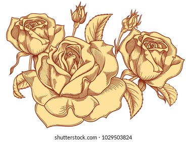 Blooming yellow nude roses flowers , detailed hand drawn vector illustration. Romantic decorative flower drawing . All line art rose objects isolated on white background.