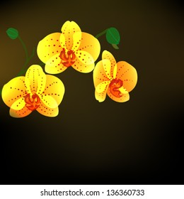 blooming yellow phalaenopsis orchids vector  on black background