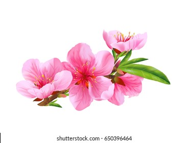 Blossom branch peach. Vector.