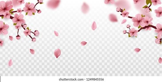 Blossom. Cherry blossom. Spring flowers. Sakura flowers. Vector