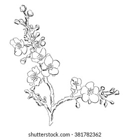 Blossom flower.Black and white hand drawn vector illustration in sketch style.