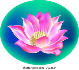 A blossom lotus flower in a pool and reflection on water. vector, illustration