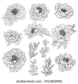Blossom peony flowers. A set of Hand drawn outline illustrations with floral theme