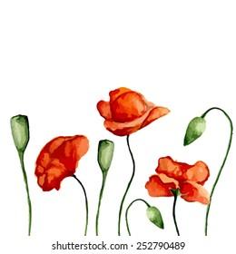 Blossom poppies. Watercolor. Vector illustration