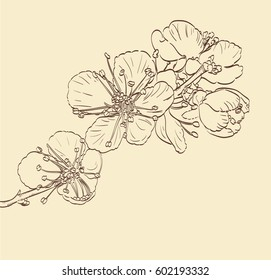 blossom spring tree flowers. hand drawn vector background