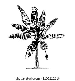 The blossoming banana tree, the black vector drawing on a white background