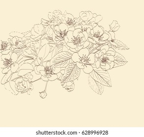 blossoming pear tree flowers line art hand drawing. spring stylish background with flower outline. vector