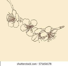 blossoming tree flowers line art hand drawing. spring stylish background with sakura flower outline. vector