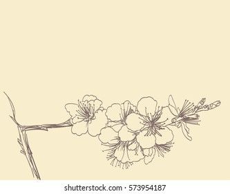 blossoming tree line art hand drawing. spring stylish horizontal background with plum flowers outline vector