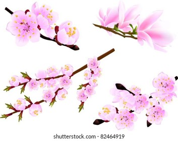 Blossoming twig of spring cherry and magnolia trees isolated on white (vector illustration)