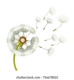 Blowing dandelion flower with fragile flying parts on green stem vector illustration isolated on white background. Soft blowball icon realistic design