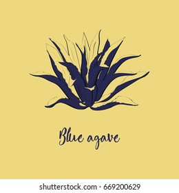 Blue agave hand drawn illustration in sketch style. Main tequila ingredient