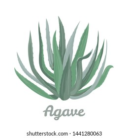 Blue agave isolated on white background. Vector illustration in cartoon flat style.