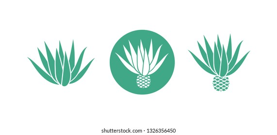 Blue agave logo.  Isolated agave on white background. EPS 10. Vector illustration