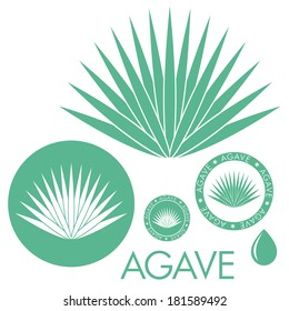 Blue agave. Logo. Isolated agave on white background