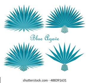 Blue agave or tequila agave plant.