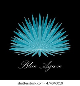 Blue agave or or tequila agave plant. Vector illustration.