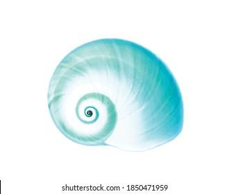 Blue aqua detailed simple sea shell isolated on white