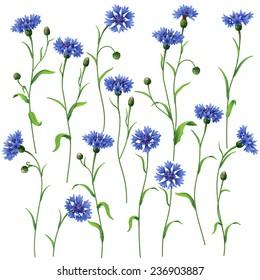Blue cornflowers set isolated on white.