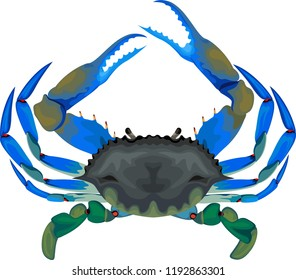 blue crab - vector illustration