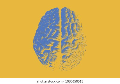 Blue engraving brain illustration in top view isolated on yellow background