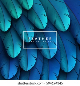Blue feathers background. Eps10 vector illustration.