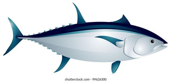 Blue fin tuna fish vector image