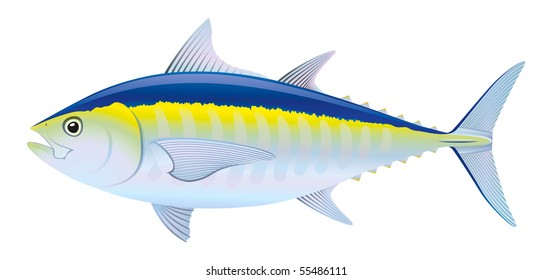 "Blue fin Tuna (Thunnus thynnus) saltwater fish. ""Full compatible. Created with gradients."""