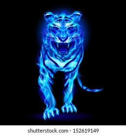 1000 Blue Tiger Pictures Royalty Free Images Stock Photos And