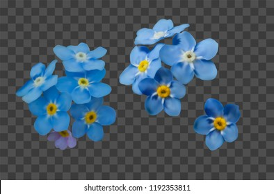 Blue forget me not spring flowers on transparent grid background. Photo realism macro. Decorative elements for greeting cards, invitations. Vector set for your design.