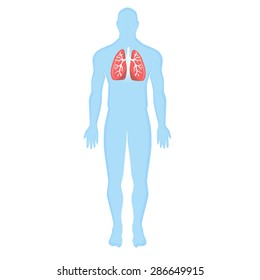 blue human silhouette, human bronchi on a white background. Modern Medical vector infographics. bronchi disease, pneumonia, common cold, infection in the bronchi