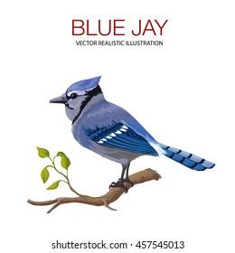Blue Jay Bird Images Stock Photos Vectors