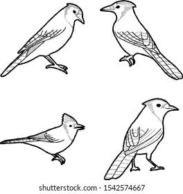 Blue Jay Animal Vector Illustration Hand Drawn Cartoon Art
