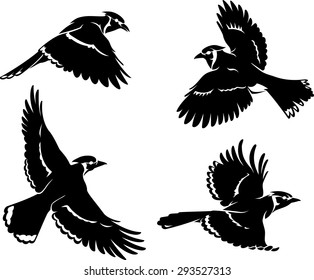 Blue Jay Bird Set Silhouette
