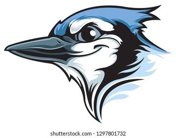 Blue Jay isolated
