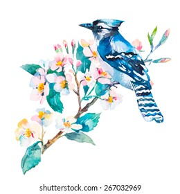 Blue jay isolated on a white background. It'S Spring. Spring flowers.Watercolor.Vector.