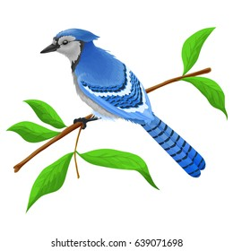 Blue jay isolated on white background. Sitting bird with shadows.