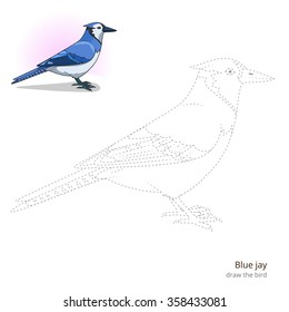 Blue jay learn birds educational game learn to draw vector illustration