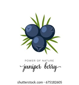 Blue juniper berry flat icon with inscription colorful vector illustration isolated on white.