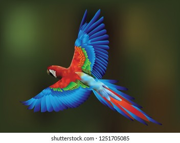 Blue Macaw illustration