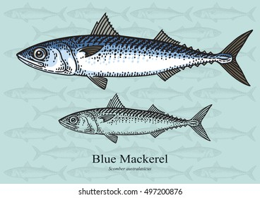 Blue Mackerel. Vector illustration with refined details and optimized stroke that allows the image to be used in small sizes (in packaging design, decoration, educational graphics, etc.)