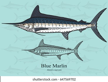Blue Marlin, Squadron. Vector illustration with refined details and optimized stroke that allows the image to be used in small sizes (in packaging design, decoration, educational graphics, etc.)