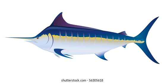 Blue Marlin Swordfish (Makaira nigricans) saltwater fish.  