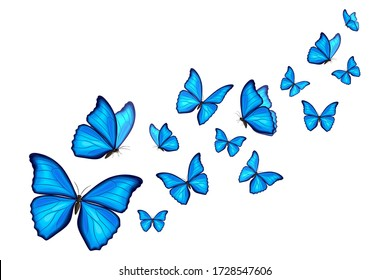 Blue morpho butterflies fly on white background. Vector illustration. Decorative print.