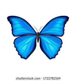 Blue morpho butterfly on white background. Vector illustration. Decorative print.