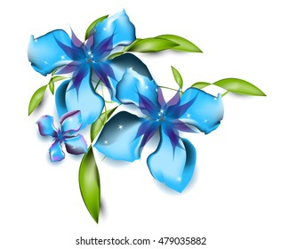 blue orchid flower vector