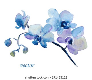Blue Orchid flower. Watercolor floral illustration. Floral decorative element. Vector floral background.