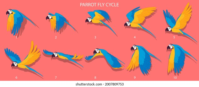 Blue Parrot Fly cycle frame by frame loopable vector file ready for 2D animation, the editable Illustration source file for motion graphics, infographics, animated video, explanatory, E-learning