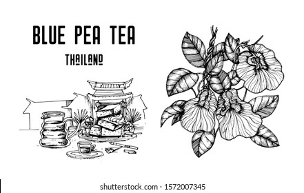 Blue pea tea vector illustration isolated on a white background. Clitoria ternatea. Butterfly pea tea and pigeon wings. Hand drawn illustration. Black ink drawing. Tea for weight loss and longevity.